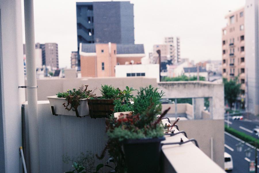 YASHICA Electro 35 GXで撮影した作例4