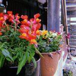 タイムスタンプ(日付)付きフィルムカメラアプリ「Huji Cam」の作例・特徴・使い方